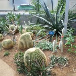 Cacti in glasshouse