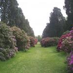 Avenue in gardens